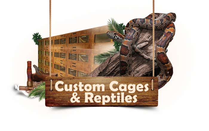 Custom Cages and Reptiles